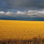dahr_harvest-time-2