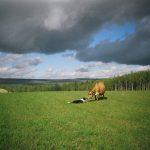 farrel_duffy-momma-cow-2