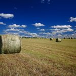 lazy-summer-afternoon-on-the-prairie_pl-2
