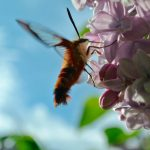 pollinate-2